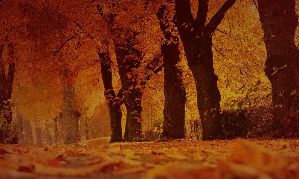 Celeiros Abundantes: fique atento à ansiedade na busca da provisão