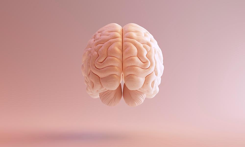 Mantendo o cérebro em dia