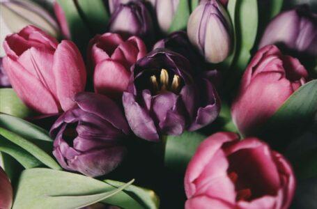 A mensagem da primavera
