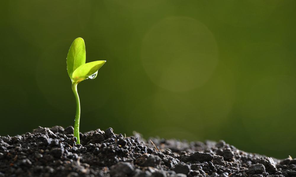 Crescimento saudável: nosso maior desafio
