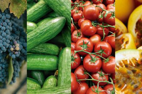 Uvas, tomates, pepinos e maracujás