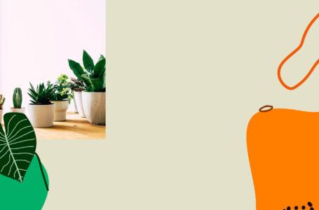 Como cuidar de suculentas em casa?