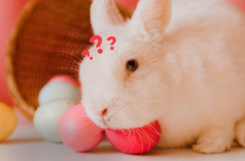 Se não é sobre ovos e coelhos, é sobre o que?